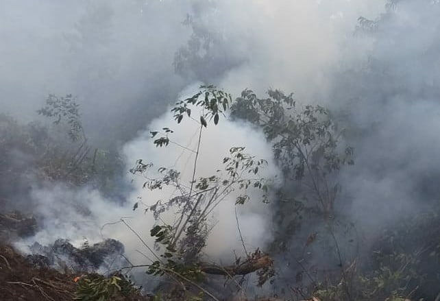 Lahan Perbatasan Desa Segamai Terbakar