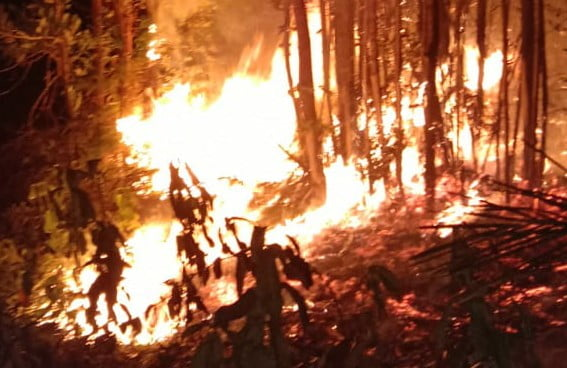 Lagi-lagi Lahan Terus Terbakar, Malam ini Amukan Api di Desa Tambak