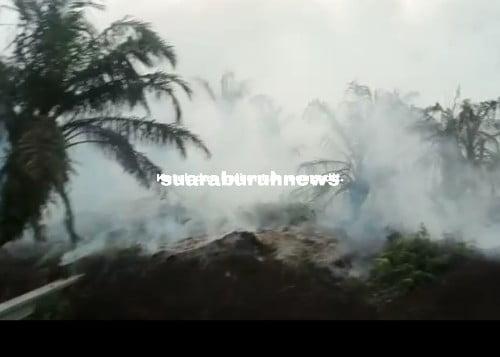 Lahan PT ADEI Plantation Terbakar