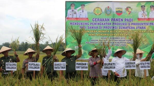 Kasrem 022/Pantai Timur Hadiri Panen Perdana Propinsi Sumatera Utara di Nagori Maligas Bayu