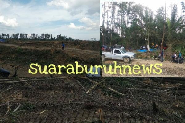 Kejam, Kebun Sawit Warga Segati Diratakan PT NWR Ratusan Hektar
