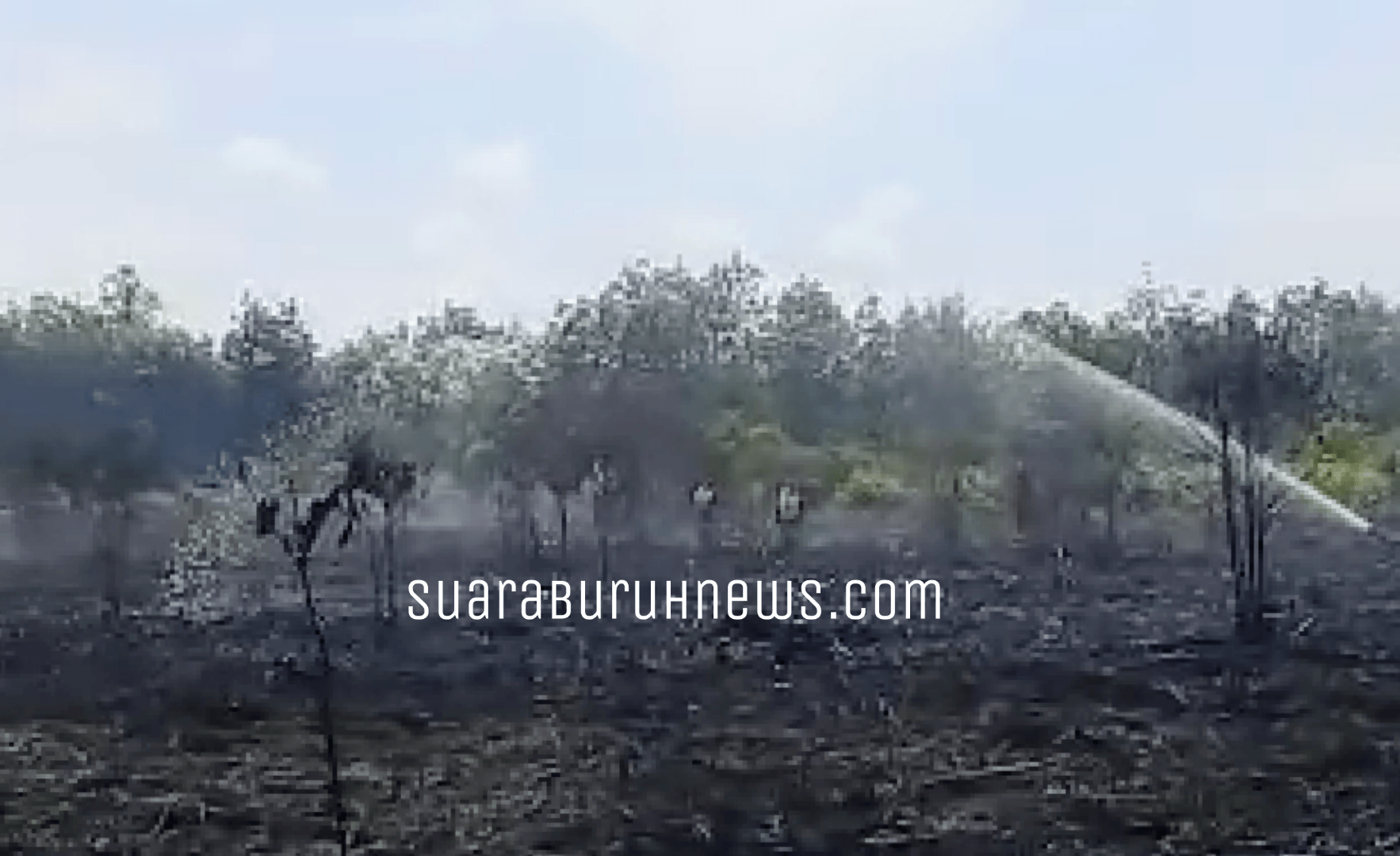 Karhutla Gulung Lahan Desa Gambut Mutiara 100 Hektar